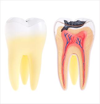Zobni živec