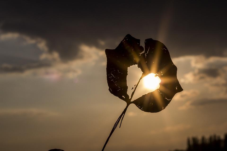 sun-622740_960_720